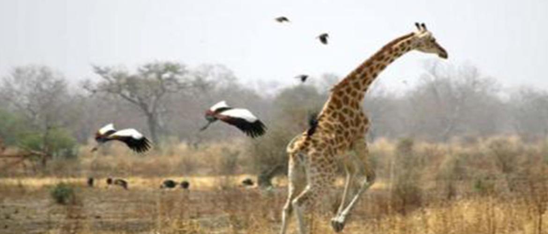 Safari Discovery